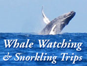 Whale Watching Excursions and Snorkling Trips