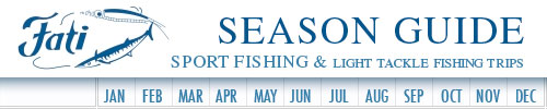 The best times for sports fishing in Cabo San Lucas